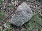 Granite rock with xenolith