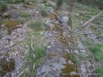 Linear joints in some Boundary Hill granite, colonised by plants like Rock Fern and Rock Isotome.