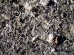 Most Boundary Hill granite is porphyritic, with often very large feldspar minerals (phenocrysts).