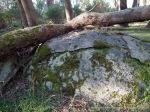 Exfoliating granite - ideal reptile habitat.