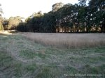 I cut the long paddock grass unevenly, to provide habitat for bandicoots, quail and the like.