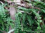 Necklace Fern has also had a good season, with plenty of moisture over Summer.