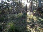 Grassy, herb-rich understory