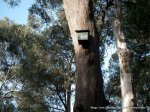 One of the many nest-boxes installed in the forest (for brushtail possums).