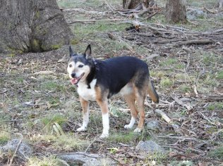 Faithful companion, the late Molly.