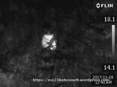Koala - cropped & enlarged image